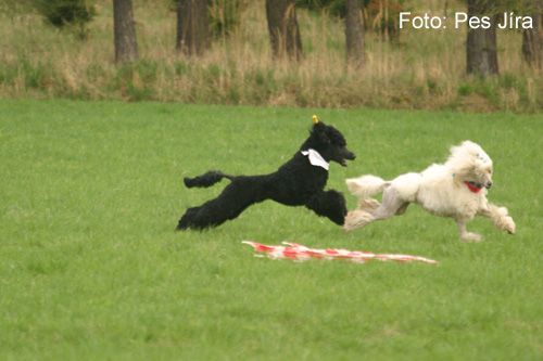 Coursing (picture 3)