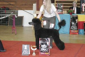 Poodle Club Show Prague 2006
