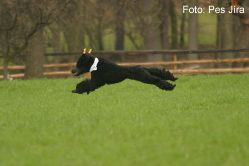 Coursing (picture 1)